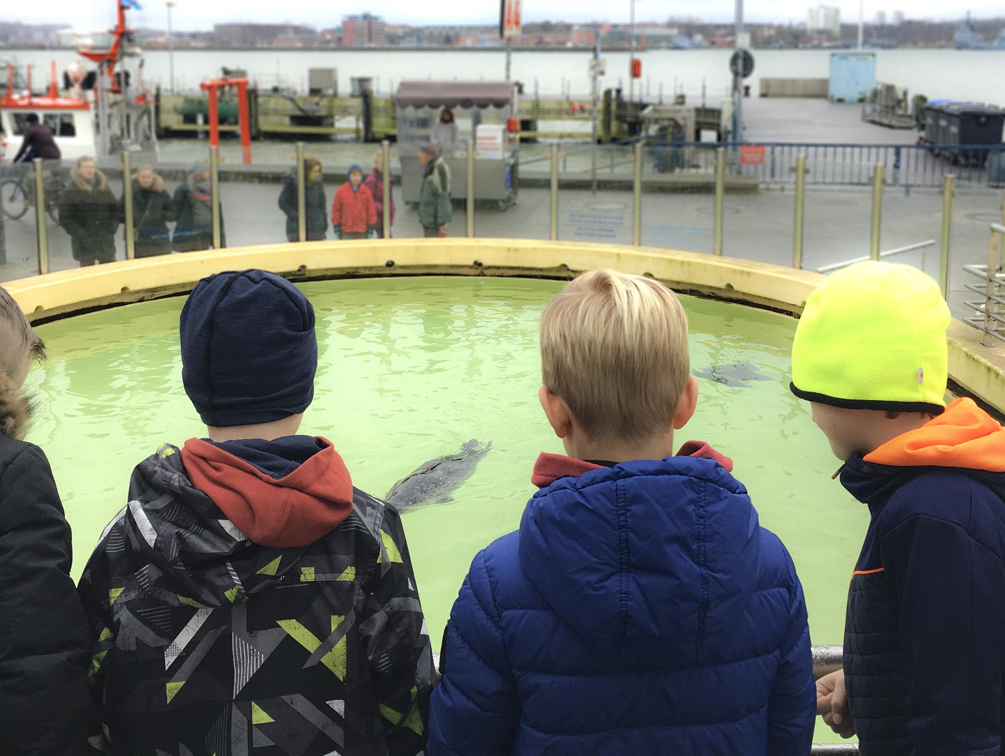 Aquarium Kiel: Wo Fischstäbchen schwimmen und Seeigel picksen