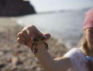 Kleine Krabbenlehre: Bloss nicht kneifen lassen!