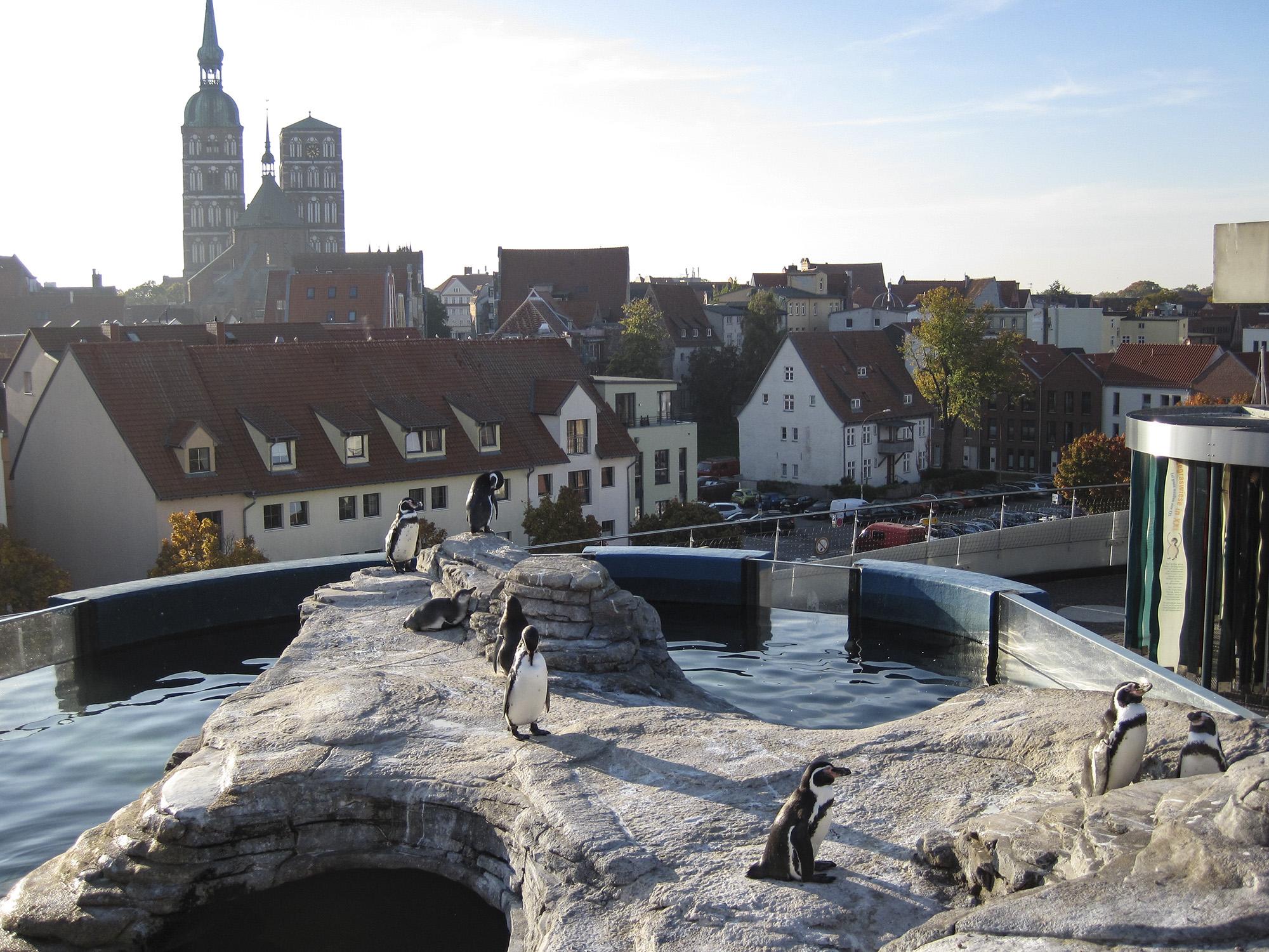 Stralsund: Unseren blauen Planeten im Ozeaneum erleben