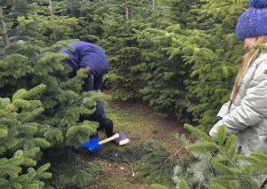 Fiefbergen: Auf zur Weihnachtsbaum-Jagd