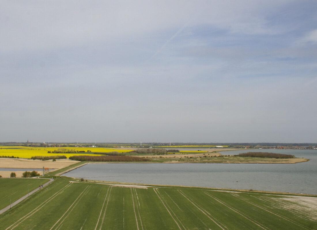 Rapsfelder Insel Fehmarn