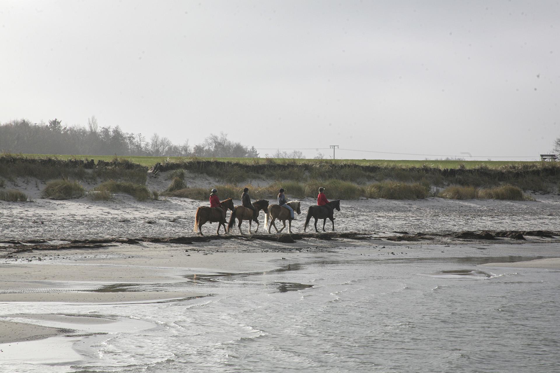 Reiten am Meer: Im Winter meistens erlaubt